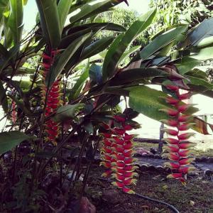 A garden outside Dulce Morada Hostal