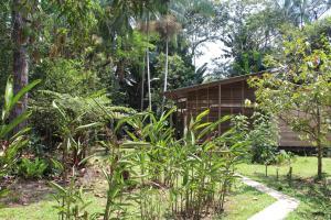 A garden outside Palmayacu - Refugio Amazónico
