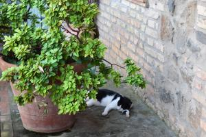Pet or pets staying with guests at I Casali della Parata
