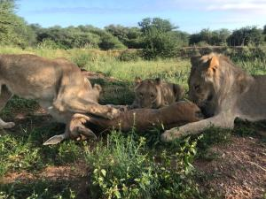 Pet or pets staying with guests at Terrafou Game Lodge