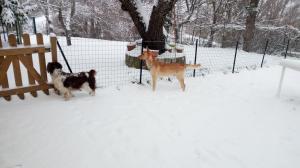 Il Gelso durante l'inverno
