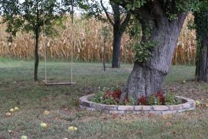 Zahrada ubytování Robinzonski smještaj Marcin salaš