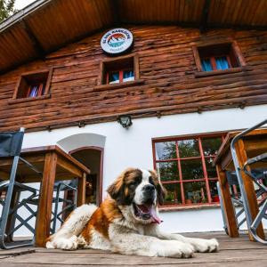 Huéspedes con una o varias mascotas en KM SUN HOSTEL