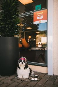 Pet or pets staying with guests at Hotel 10 Joinville