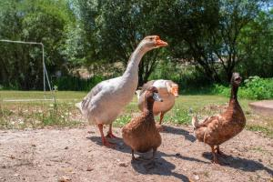 Animals at the holiday park or nearby