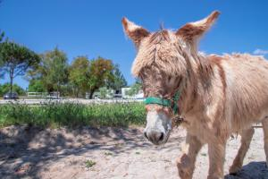 Pet or pets staying with guests at Quinta da Saudade