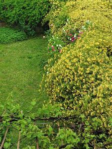 A garden outside Le Rondini