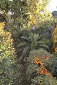 A garden outside MAGNIFIQUE APPARTEMENT JEAN MEDECIN/NOTRE DAME