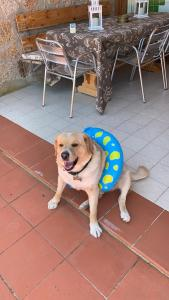 Pet or pets staying with guests at Hotel Olimpia