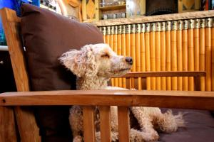 Pet or pets staying with guests at Sunset Inn