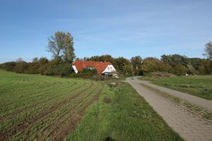 Ein Garten an der Unterkunft Landhaus Alt Reddevitz
