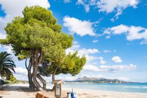 En strand vid eller i närheten av lägenheten
