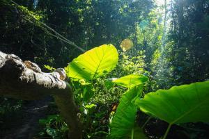 A garden outside Cat Tien Jungle Lodge