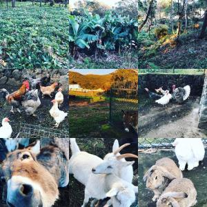 Pet or pets staying with guests at Make it Happen Farm