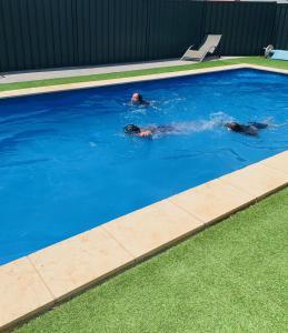 The swimming pool at or near Thomas Lodge Motel