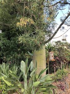 A garden outside The Canungra Motel