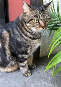Pet or pets staying with guests at Green Tiger House