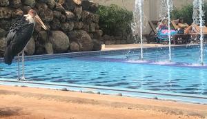 The swimming pool at or near Ameg Lodge Kilimanjaro