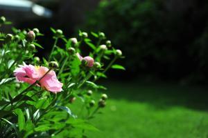 A garden outside B&B Portico Rosso