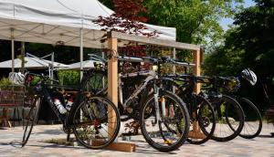 Radfahren an der Unterkunft Genusshotel Hirschen - Erholung im Grünen (Südschwarzwald) oder in der Nähe