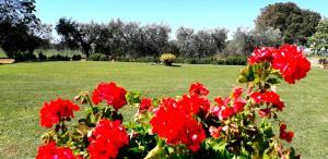 A garden outside Agriturismo Ristorante Monte Argentario
