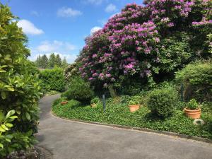 A garden outside Villa Hortensie