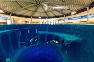 Der Swimmingpool an oder in der Nähe von Friendly Cityhotel Oktopus