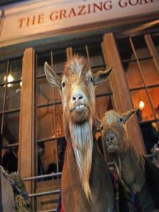 חיה או חיות מחמד עם האורחים ב-The Grazing Goat