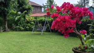 A garden outside Shikher Guest House