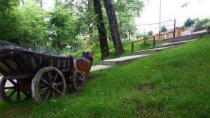 Сад в Туристический комплекс АндриаНова