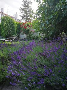 Zahrada ubytování Apartmány Gulliver