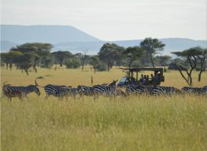 Animals at the luxury tent or nearby