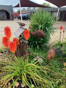 A garden outside Thomas Lodge Motel