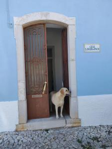 Pet or pets staying with guests at Casa Largo do Poço Guesthouse