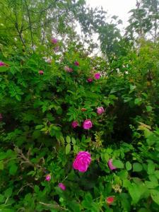 Ein Garten an der Unterkunft Haus ingrid
