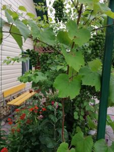 Сад в Guest house U Iriny