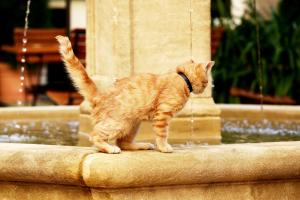 Pet or pets staying with guests at Garden Living - Boutique Hotel