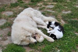 Animal sau animale de companie care stau la Bed & Breakfast Popamuseum Tarpesti-
