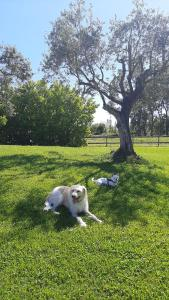 Pet or pets staying with guests at Il Casale Corte Rossa