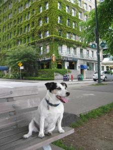 Pet or pets staying with guests at The Sylvia Hotel