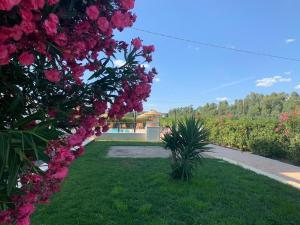 Сад в Hotel Letizia