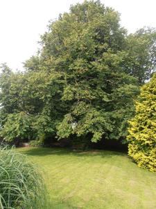 A garden outside Lowenac Hotel