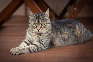 Pet or pets staying with guests at Hubert Varga