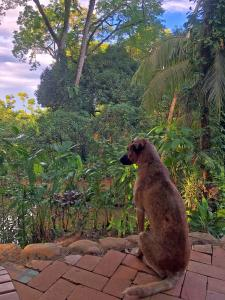 Mascotas con sus dueños en Cascada Verde Hostel