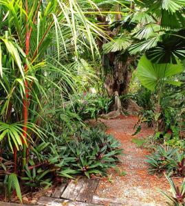 A garden outside Rainforest Castaways Resort and Spa