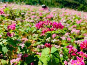 Een tuin van homestay bongbang