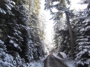 Schwarzwald-Gasthof Hirsch im Winter
