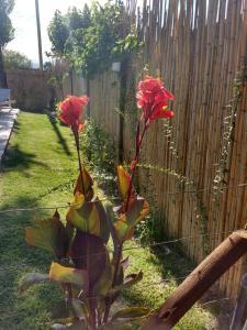A garden outside El Indio - Casa de campo