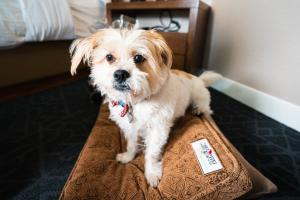 Pet or pets staying with guests at Malcolm Hotel by CLIQUE