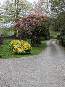A garden outside Belmount Hall
